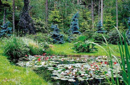 Visite jardin albert kahn un petit tr sor aux portes de for Jardin anglais albert kahn