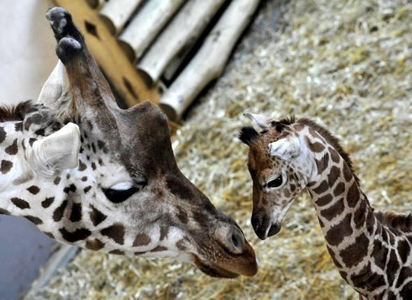 Visite histoires d 39 animaux au zoo du jardin des plantes for Jardin animaux paris